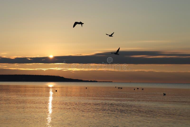 Uccelli sul mare fotografia stock