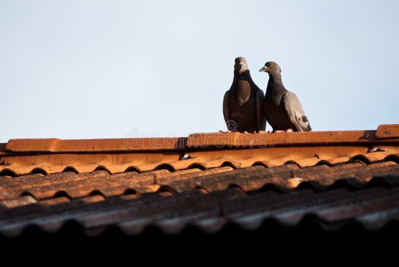 Uccelli sul tetto in Tailandia fotografia stock