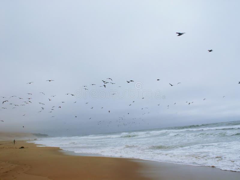 Uccelli sulla spiaggia fotografia stock libera da diritti