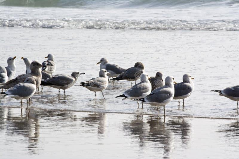 Uccelli sulla spiaggia fotografie stock libere da diritti