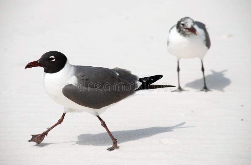 Uccelli sulla spiaggia fotografia stock