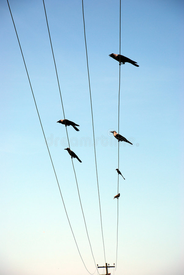 Uccelli sulla torretta elettrica fotografie stock