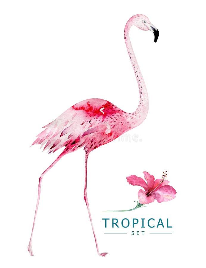 Uccelli tropicali dell'acquerello disegnato a mano messi del fenicottero Illustrazioni esotiche dell'uccello, albero della giungl fotografie stock libere da diritti