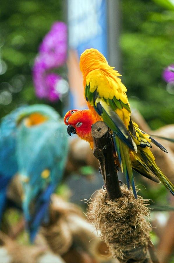 Uccelli variopinti appollaiati e riposare immagini stock