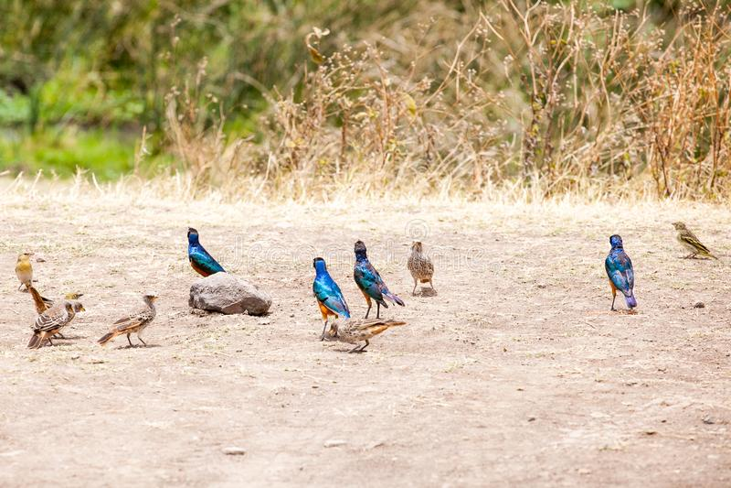 Uccelli variopinti che stanno alla riva di un lago antico immagine stock