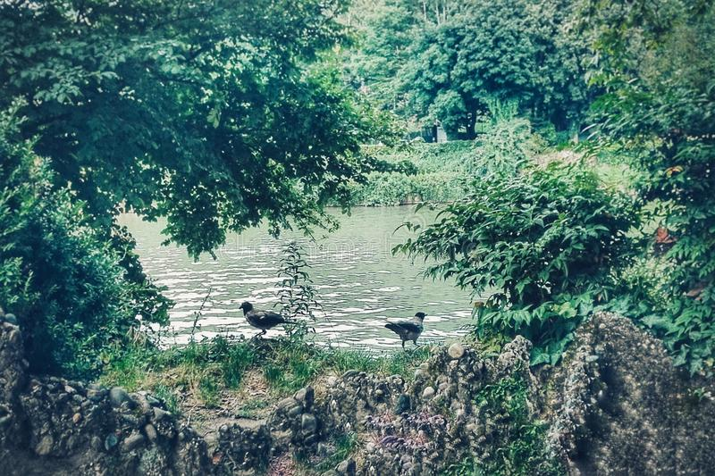 Uccelli vicino ad un fiume fotografia stock libera da diritti