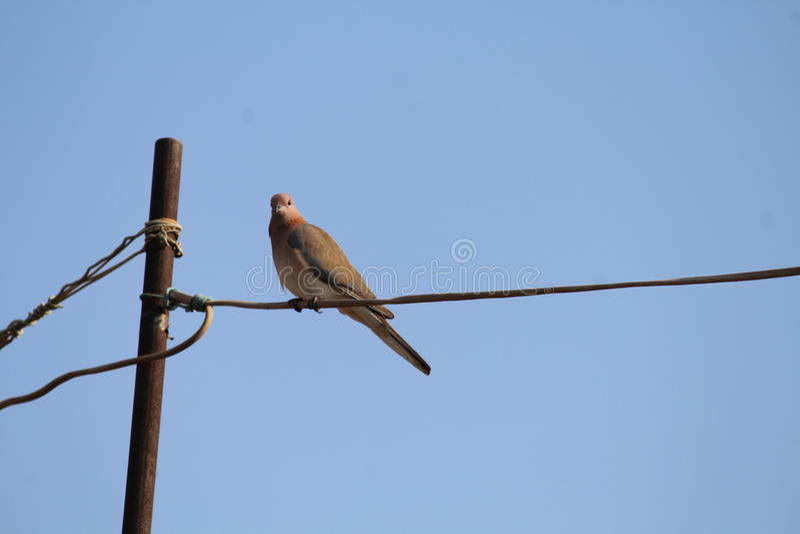 Uccelli vuoti fotografie stock
