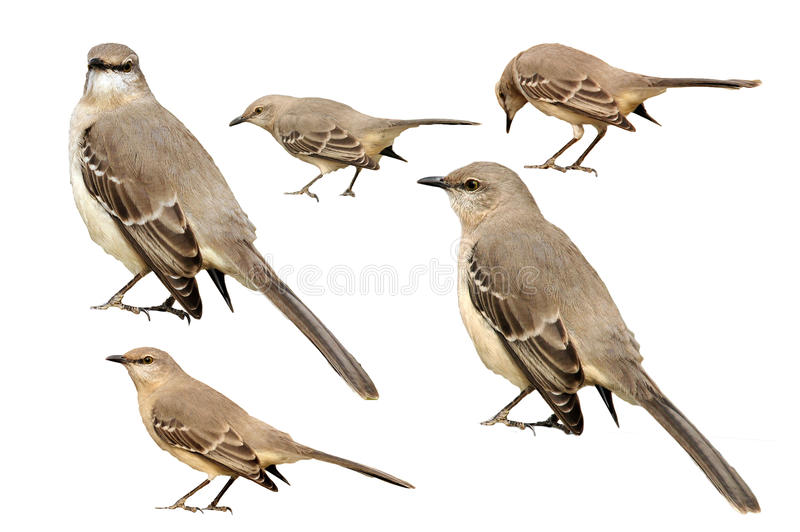 Uccellini immagine stock libera da diritti