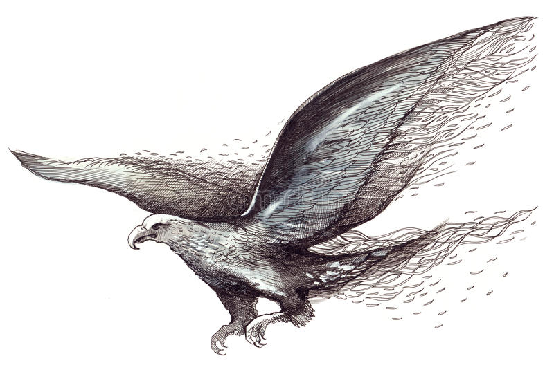 Uccello royalty illustrazione gratis