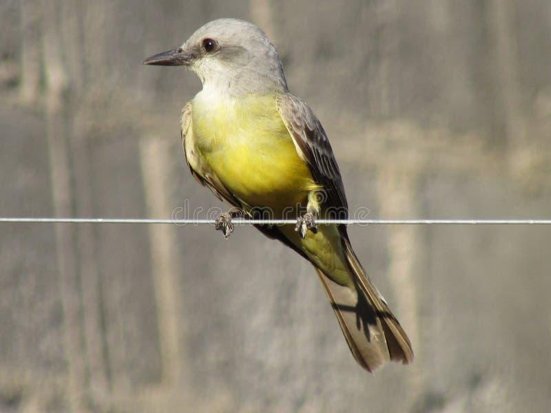 Uccello 4 fotografie stock libere da diritti
