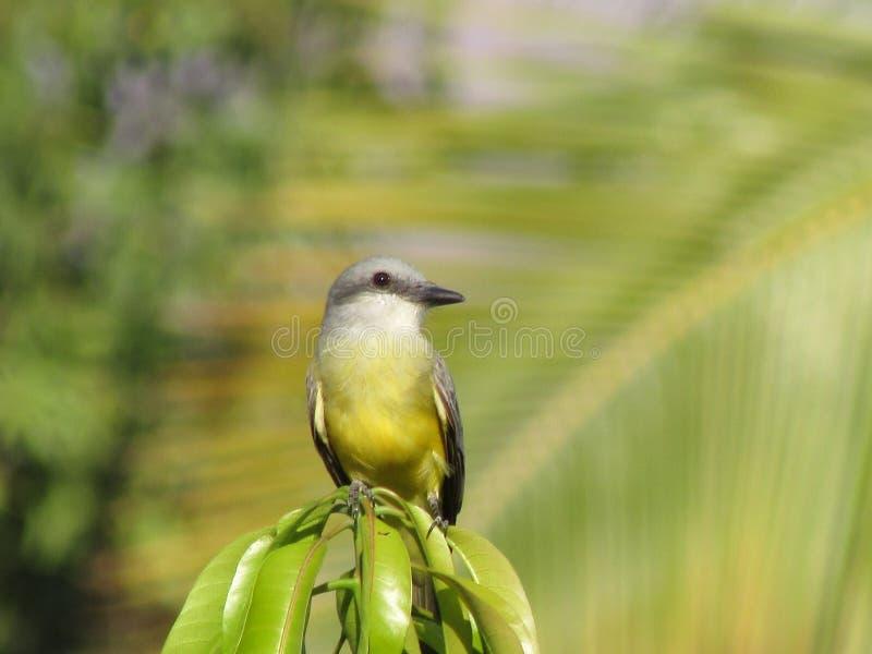 Uccello 3 fotografia stock