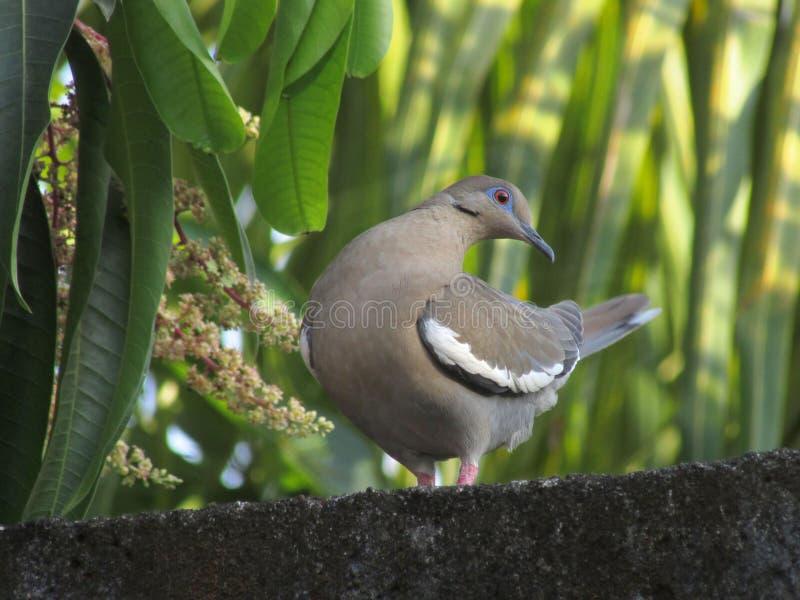 Uccello 1 fotografia stock libera da diritti