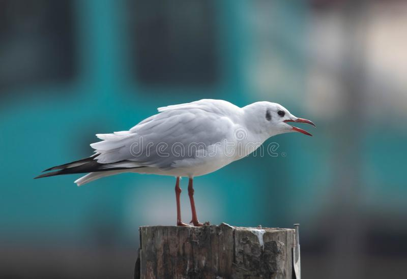 Uccello acquatico bianco che guarda da sopra fotografia stock