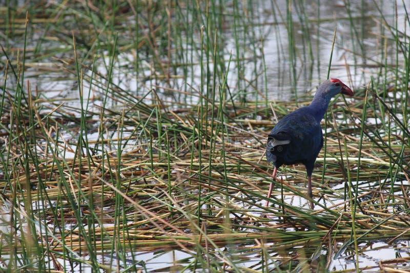 Uccello ad un'estremità fotografie stock libere da diritti