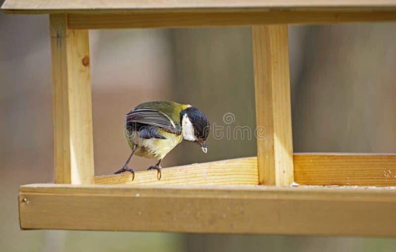 Uccello all'alimentatore dell'uccello immagini stock libere da diritti