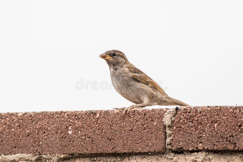 Uccello attento che sopravvive nella periferia fotografia stock