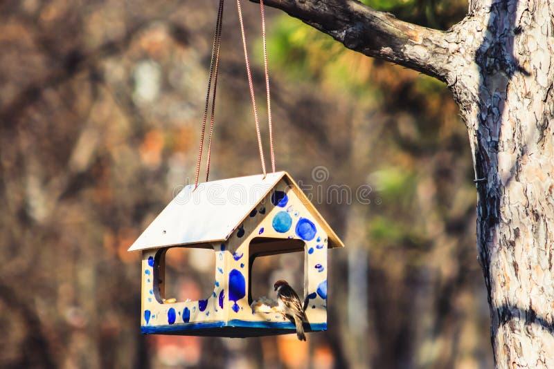 Uccello in aviario fotografia stock libera da diritti