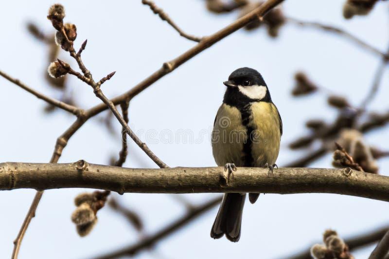 Uccello in bianco e nero fotografia stock