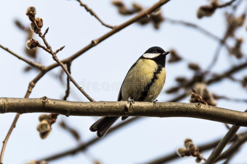 Uccello in bianco e nero immagini stock