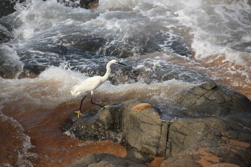 Uccello bianco in oceano fotografia stock libera da diritti