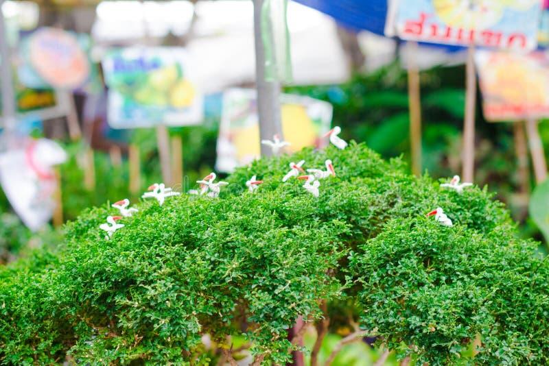 Uccello bianco sull'albero fotografia stock