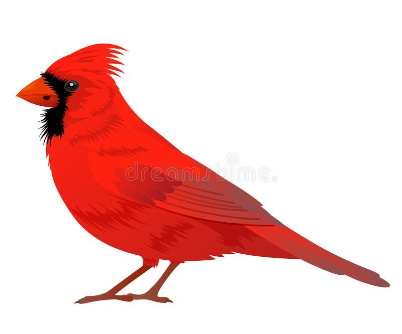 Uccello cardinale nordico illustrazione di stock