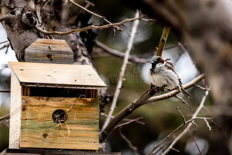 Uccello a casa fotografie stock