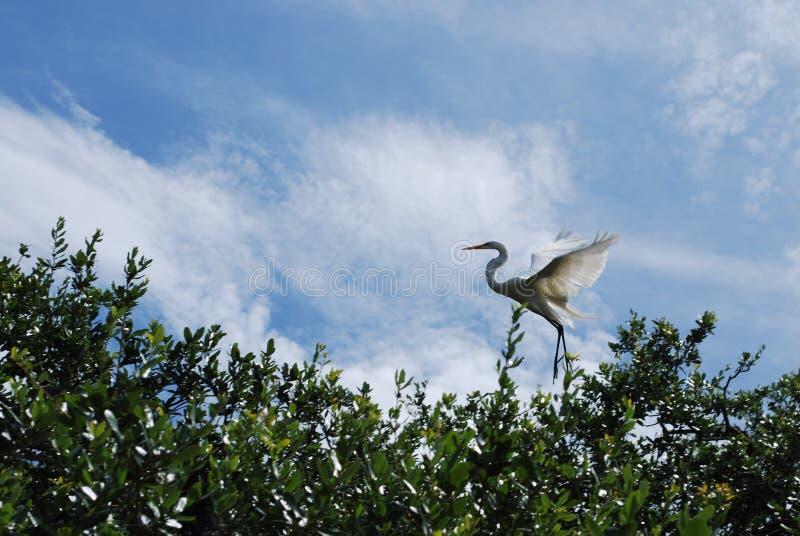 Uccello che lascia il nido immagine stock