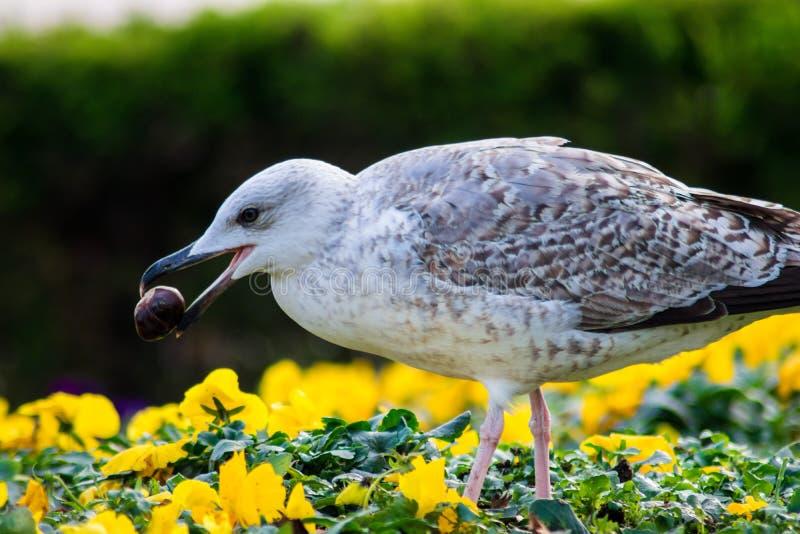 Uccello che nasconde un nute fotografie stock libere da diritti