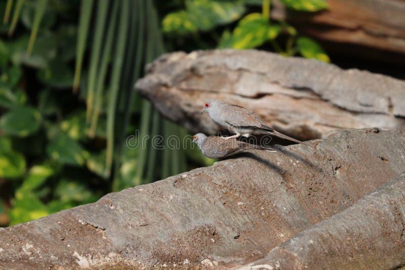 Uccello che si siede sul ramo a Stuttgart in Germania immagine stock
