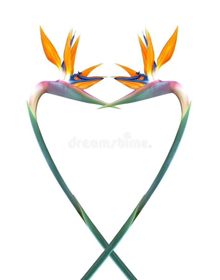 Uccello colorato pastello di progettazione di forma del cuore del fiore di paradiso su fondo bianco immagine stock