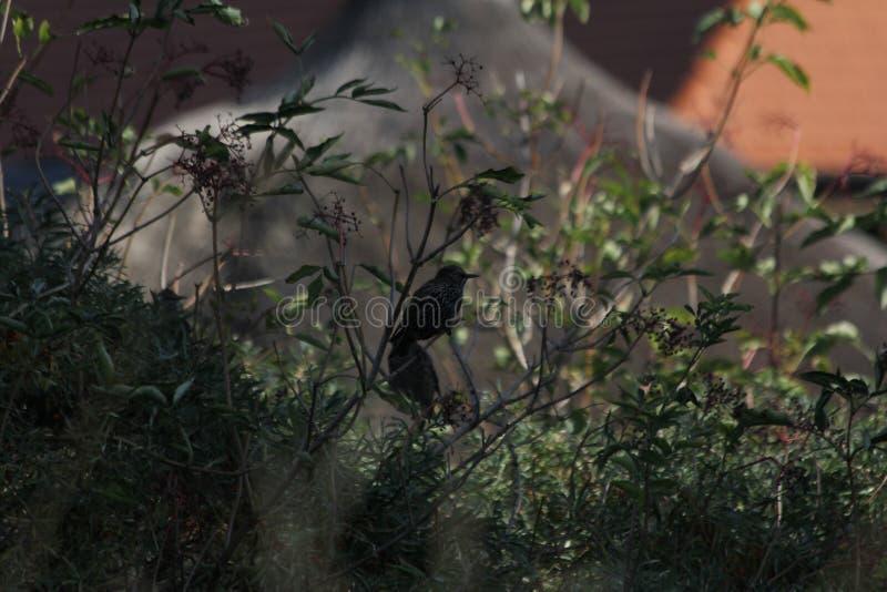 Uccello con signora fotografia stock
