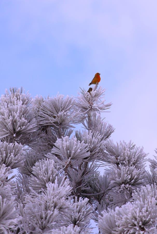 Uccello congelato nell'albero immagine stock