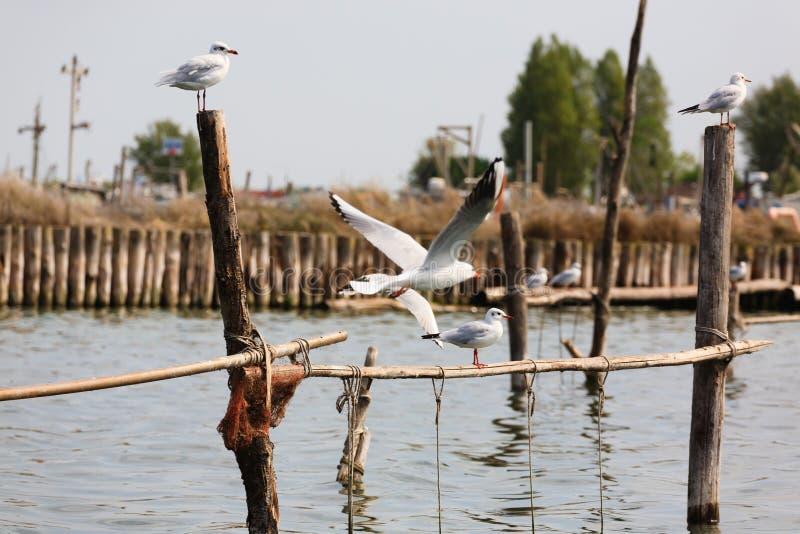 Uccello dalla laguna del Po immagine stock