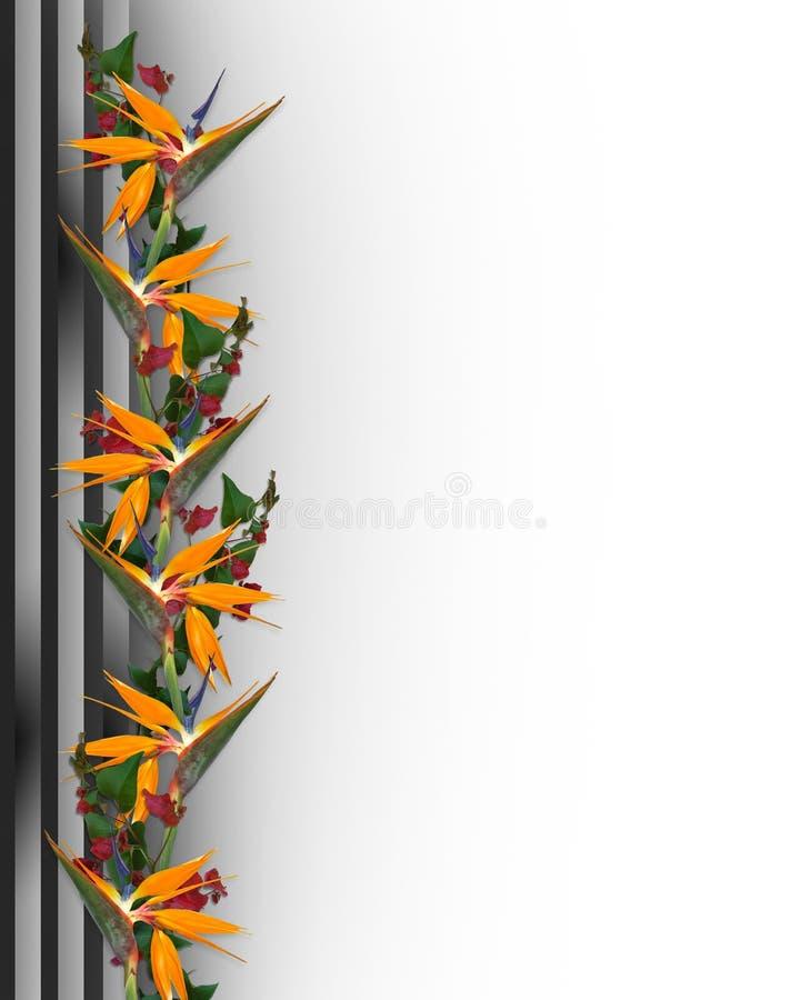 Uccello del bordo dei fiori del paradiso tropicale   illustrazione di stock