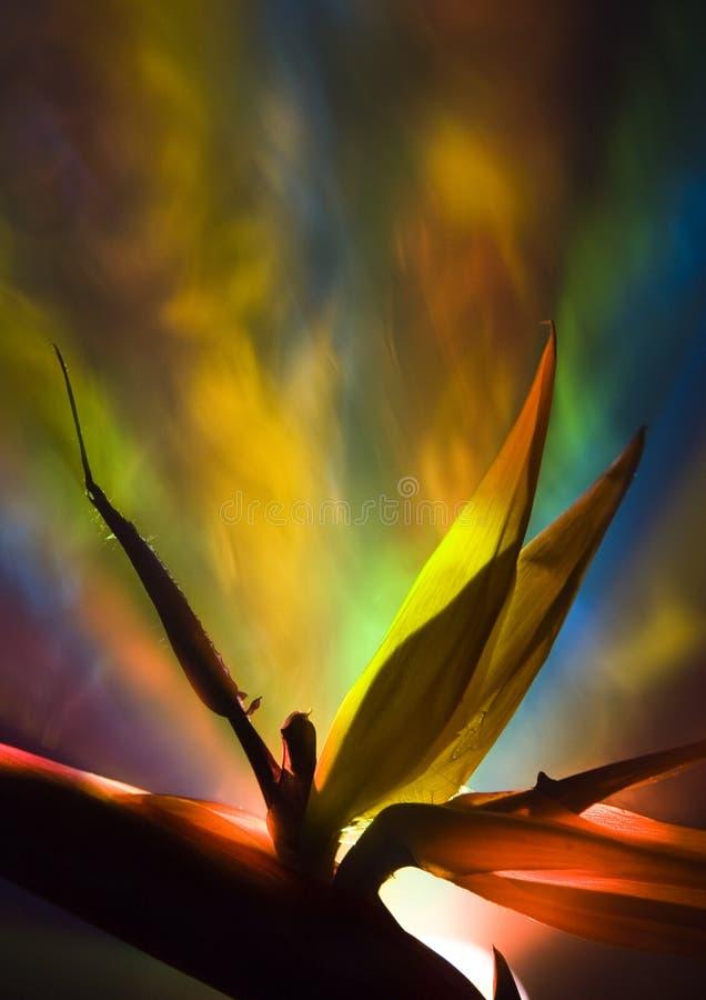 Uccello del giglio di paradiso immagini stock libere da diritti