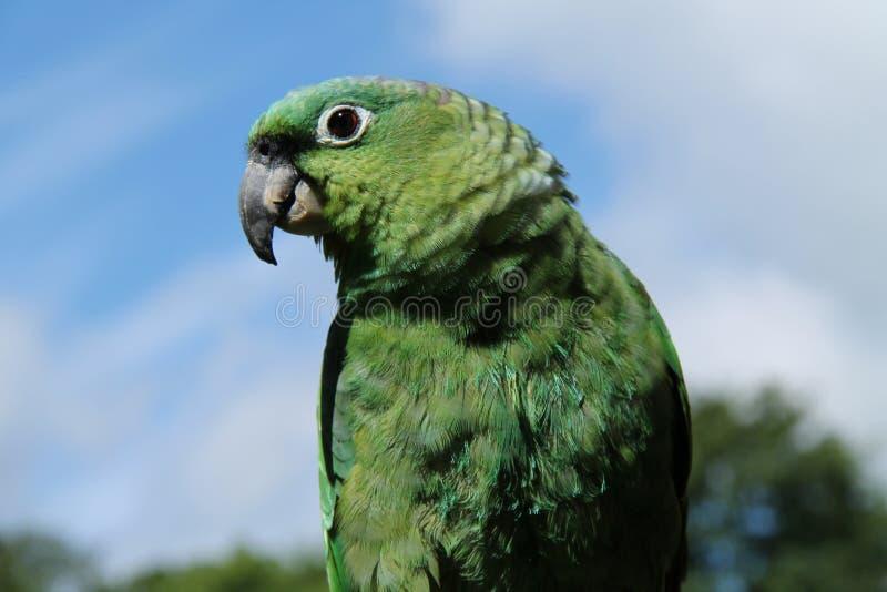 Uccello del pappagallo, fotografia stock