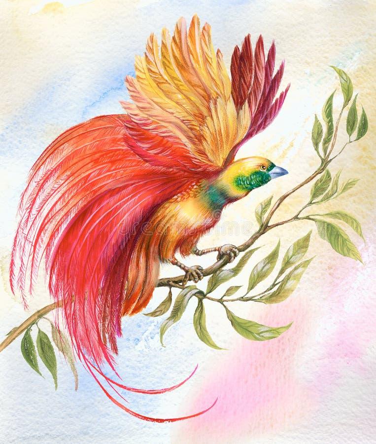 Uccello del paradiso illustrazione vettoriale