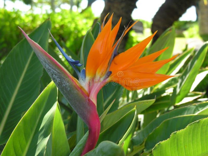 Download Uccello del paradiso immagine stock. Immagine di sole - 3895207