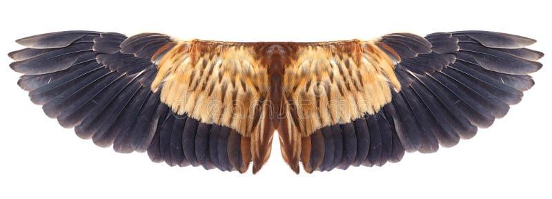 Uccello dell'ala immagine stock