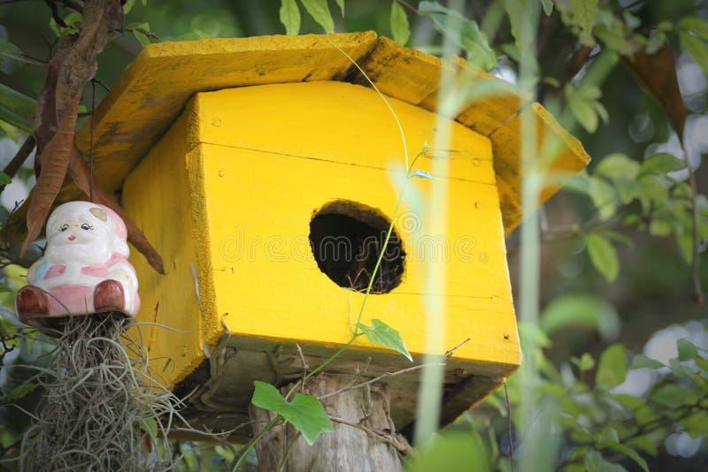 Uccello della casa in giardino fotografia stock libera da diritti