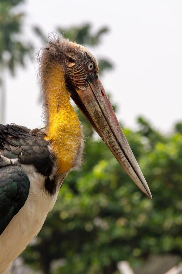 Uccello della cicogna fotografia stock