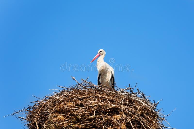 Uccello della cicogna nel nido immagini stock