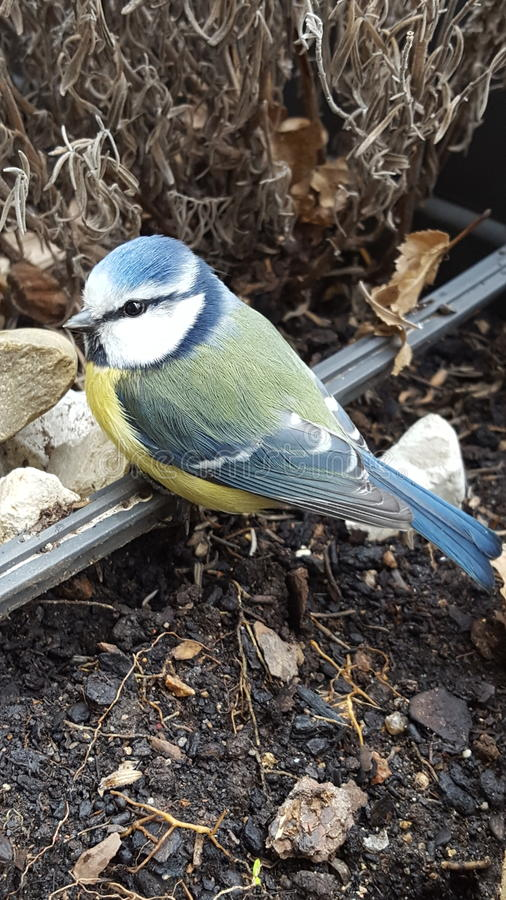 Uccello di bambino immagini stock libere da diritti