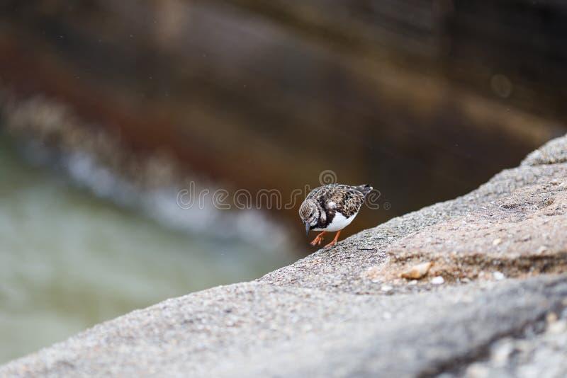 Uccello di camminata fotografie stock libere da diritti
