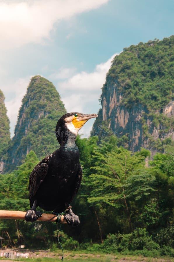 Uccello di Cormorant appollaiato su un Palo nel fiume Lijiang di Guilin