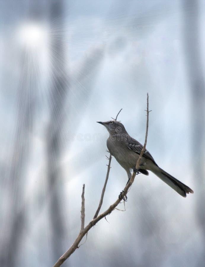 Uccello di derisione immagini stock