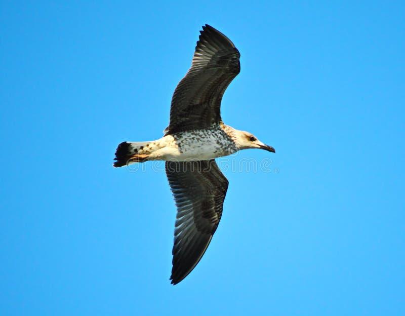 Uccello di mare fotografia stock