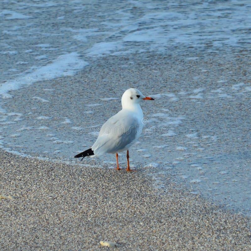 Uccello di mare fotografia stock libera da diritti