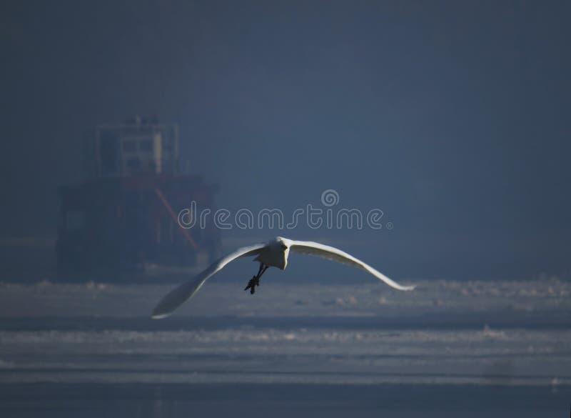 Uccello di Mistyque sul fiume congelato fotografie stock